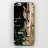 turtles iPhone & iPod Skins featuring Turtles by Stu Willard