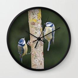 Blue Tit ( Cyanistes caeruleus) Wall Clock