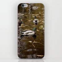 ducks iPhone & iPod Skins featuring Ducks by Devin Marie