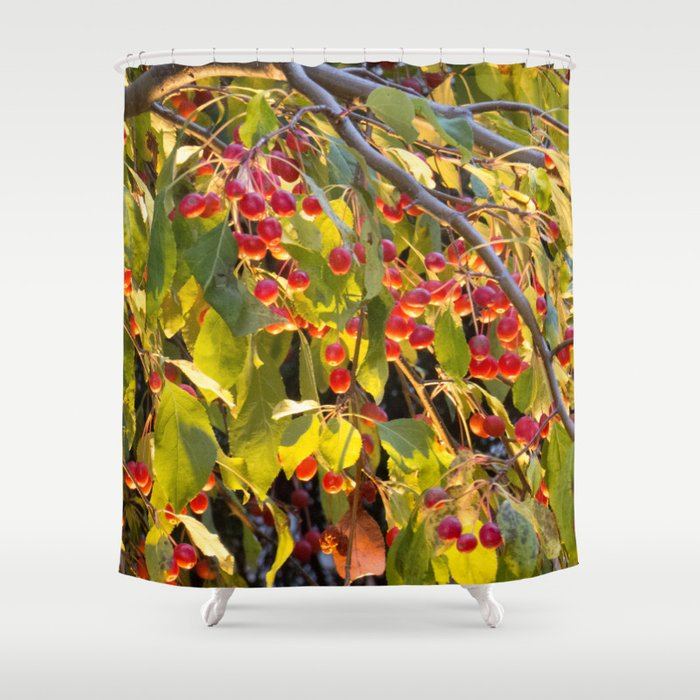 Bright red berries on a tree Shower Curtain