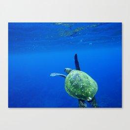 Turtle of the Sea Canvas Print