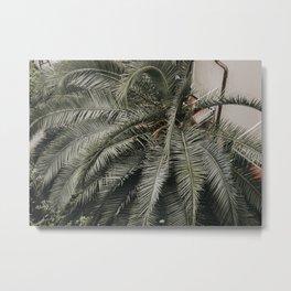 Lush Greenery of the Italian Riviera, Palm Tree Bouquet   Beach vibes travel photography, Saige Ashton Prints Metal Print
