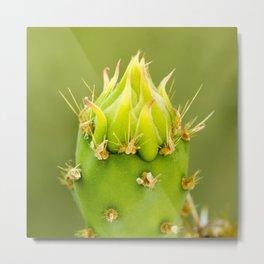 Englemann's Prickly Pear Single Bud Metal Print