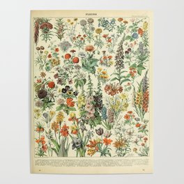 Adolphe Millot Vintage Fleurs Flower 1909 Poster
