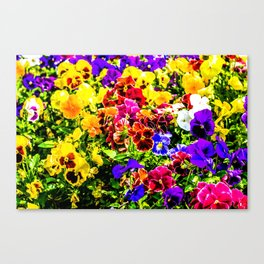 Viola Tricolor Pansy Flowers Canvas Print