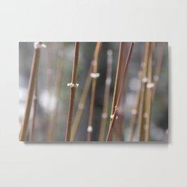 Snowy Reed Metal Print