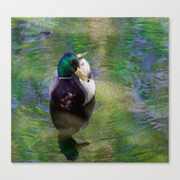Duck on shimmering water Canvas Print