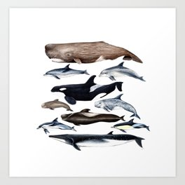 Atlantic whales, dolphins and orca Art Print