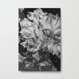 flower close up - black/white - seventeen Metal Print