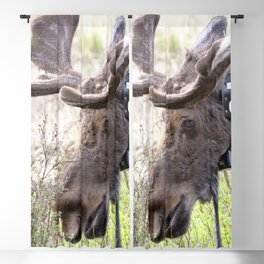 Watercolor Moose Bull 14, Rocky Mountain National Park, Bell Ringer Blackout Curtain
