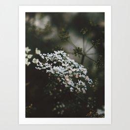Lil white flower Art Print