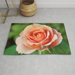 Garden pink rose flower blooming and two rose buds Rug