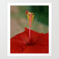 Hibiscus I Art Print