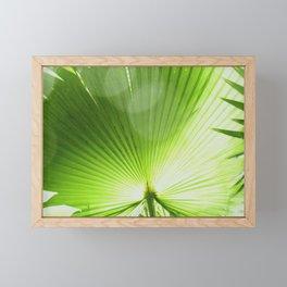 Sunlit Fan Palm Framed Mini Art Print
