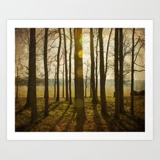 Afternoon Sunlight with Lens Flare Art Print