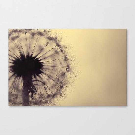 dusk - dandelion Canvas Print