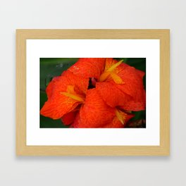 Orange Canna Lily by Teresa Thompson Framed Art Print