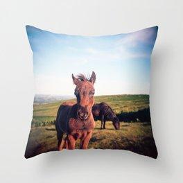 Dartmoor Pony Portrait (2) Throw Pillow