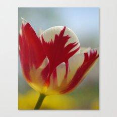 Multi-Color Tulip for a Mom Canvas Print