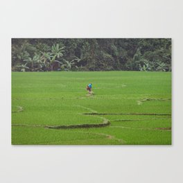 Rice Paddies in Kho Muong, Vietnam Canvas Print