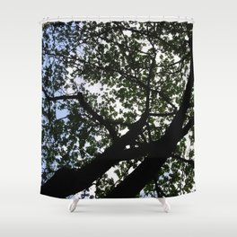 Looking up into the Kapok tree Shower Curtain