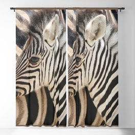 Zebra mother with Baby - wildlife Blackout Curtain