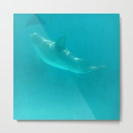 Checking out some flukes Metal Print