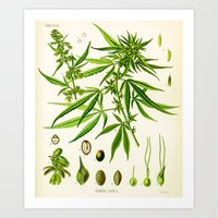cannabis Art Prints featuring Cannabis Sativa by Patrick Farnsworth