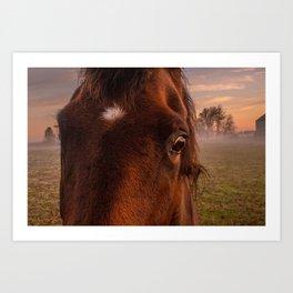 horses eye Art Print