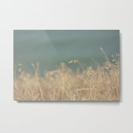 Goat Beach Grass   Metal Print