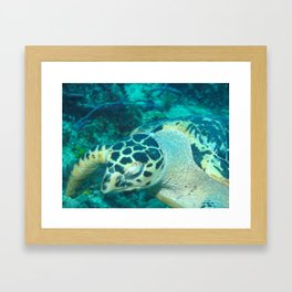 Diving Framed Art Print