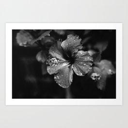 Black & White Hibiscus Art Print