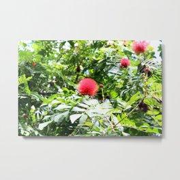 Bottle Brush Flowers on Tree Metal Print