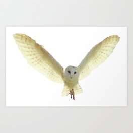 Owl Flying Design Art Print