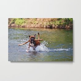 Bailey Plays in the River Metal Print
