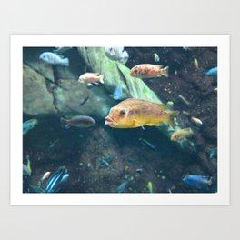 Fish 4 Art Print
