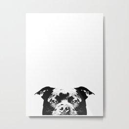 Staffordshire Bull Terrier Dog Metal Print