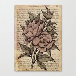 Peonies  - Color Canvas Print