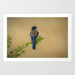 Bluebird of my Happy Space Art Print