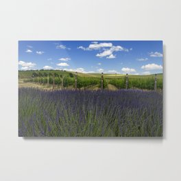 Lavender Vineyard Metal Print