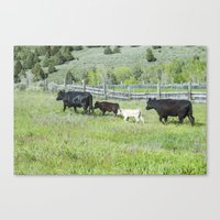 cows Canvas Prints featuring cows by Julie Luke