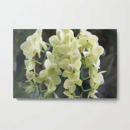 Longwood Gardens Orchid Extravaganza 69 Metal Print