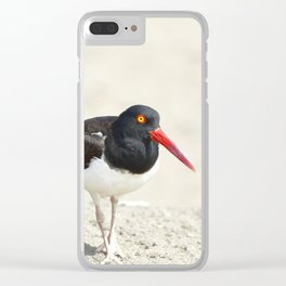 Common Oystercatcher (Haematopus palliatus) Clear iPhone Case