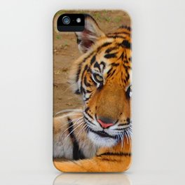 The Gaze of a Tiger iPhone Case