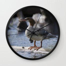 Common Merganser Wall Clock