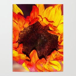 Close-up of a Bright Orange and Yellow Sunflower Poster