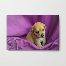 Brown puppy in purple fabric Metal Print