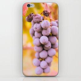 In vineyard iPhone Skin