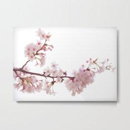 Cherry Blossom Flowers Metal Print