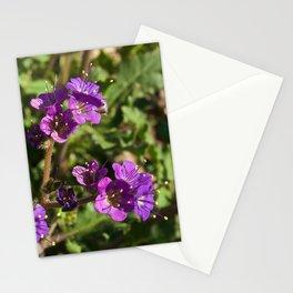 Notch-Leaved Phacelia - Desert Wildflower Stationery Cards